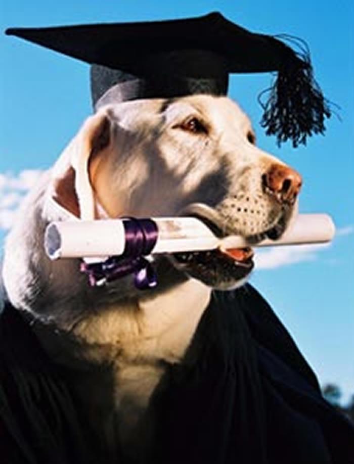 Dog Titles Explained - Labonte Canine Services